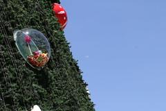 Árvore de Natal (Parque do Ibirapuera - SP) (quanaval_sp) Tags: natal christmas ibirapuera sp sãopaulo sampa paisagem parque tree árvore landscape lua moon