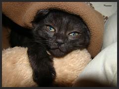 Ninna nanna (nessuno64) Tags: sleep blanket gatto sonno nanna copertina gandi sonydsch50