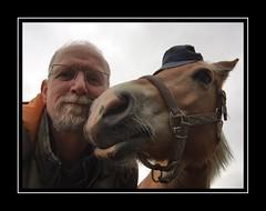 Komt die man weer :-( (gill4kleuren - 11 ml views) Tags: horse me sarah fun saar paard haflinger