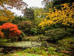 Japanese garden (Tvr-photography) Tags: autumn nature netherlands forest garden japanese hague clingendael
