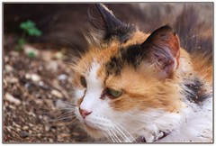 Ritorno da una battuta di caccia ... (Luciano Schano) Tags: sonyilce3000 ilce3000 sony3000 sonyemount55210 pupa gatta felino ritratto orno di una battuta caccia portrait