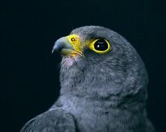 (mohd alsulaiti) Tags: bird birds canon lens zoom arabic explore arab  birdlife 2015               instagramenjoyqtr
