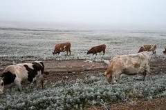 RU2013  (S.K. LO) Tags: russia easternsiberia irkutskregion