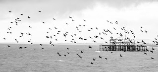 Fly past over the West Pier. (Explored)