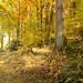 Waldweg III - forest track III
