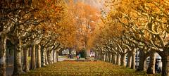 fall (caipifrutta) Tags: fall herbst leafs bltter