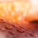 pluie sur les couleurs d'automne