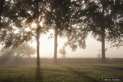 2015-10 Genieten van het Geuldal bij mist (Mechelen) (About Pixels) Tags: 1023 2015 collecties herfstseizoen limburg mechelen mechelerhof meteo mist mnd10 natuur nederland oktober specials trees fogg weather boom