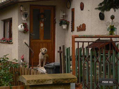Der Wachhund II