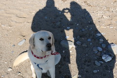 * It's all about love - (Maria Emma.) Tags: sea dog silhouette sand labrador heart taylor