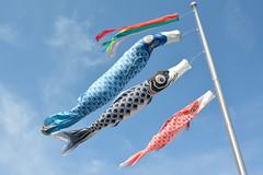 Happy New Year! (NaturalLight) Tags: park fish kite japan colorful carp yokosuka streamer windsock mikasa koinobori