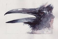 Blue and Red (Jennifer Kraska) Tags: bird art watercolor sketch jennifer kraska jenniferkraska