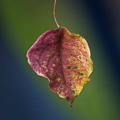Colorful leaf with colorful bokeh 2/366 1/52 (mbagwt) Tags: 366 matchpointwinner 52week 366project mpt390 2016yip