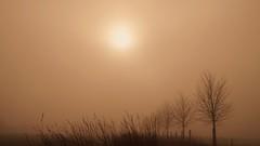 idylle mit nebel 20151228_124708 (2) (hlh 1960) Tags: sun mist sol nature misty sunrise germany landscape soleil nebel natur landschaft sonne neujahr 2016 treess
