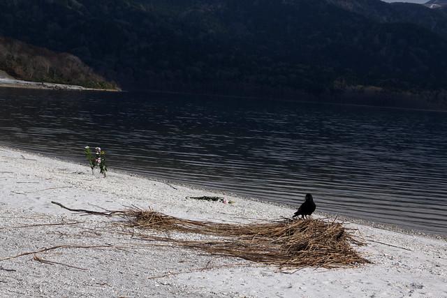 浜に供えられた花と、お供えの食べ物を狙うカラス。|恐山菩提寺