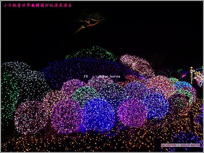 晨靜樹木園 五色星光庭園展 (45).JPG