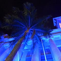 Downtown Brisbane at night (tanetahi) Tags: nightphotography afterdark evening artificiallights brisbane cbd downtown citycentre palm royalpalm blue lights roystonea cityhall