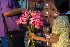 Uncharted Myanmar (mcmessner) Tags: flower kuthodawpagoda mandalay myanmar offerings submitted tcs unchartedmyanmar viewbug