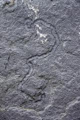 Worms Were Here (jameskirchner15) Tags: cliffsofmoher countyclare ireland limestone lowercarboniferous rock fossil wormtracks