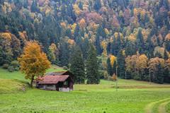 Herbstlandschaft (Alexander Burkhardt) Tags: herbst htte landschaft alpen wald baum natur farbe schweiz