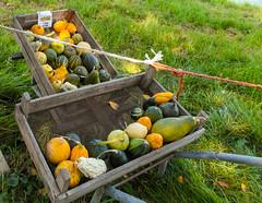 08a-Decorative Pumpkins Farm Produce Zuiderwoude  25Sep16 (1 of 1) (md2399photos) Tags: broekinwaterland hollandholiday25sep16 irenehoevetouristshop monnickendam