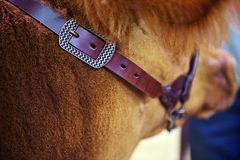 900691_b (Sharp Show Supply) Tags: medium show livestock halter dairy chevron brown beef 900691