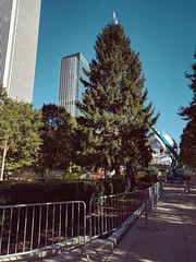 Preparation (ancientlives) Tags: chicago illinois usa millenniumpark cloudgate christmas tree celebrations streetphotography michiganavenue november 2016 autumn thursday