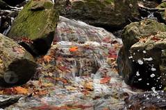 Fluid autumn colors (firstlookimages) Tags: nature natureportrait leaves color colorful autumncolors fallseason water stream outdoor rocks art artistic artisticmanipulation digitalmanipulation digitalart digitalphotography