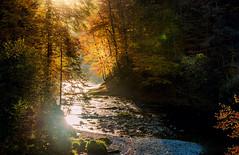 Thur in autumn (brue') Tags: thur switzerland schweiz autumn herbst river bach ebnat kappel ebnatkappel st gallen wasser water fluss natur nature sun light sonne licht wald baum tree