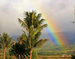 Rainbow and Palm Tree (joybidge (0n vacation)) Tags: trishcanada naturepatternscanada mauihawaii hawaii hawaiianvacation