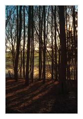 Herbstlicht im November #1 (Meine Art zu sehen) Tags: herbst landschaft natur lichtundschatten