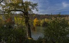 Willow on lakefront (KF-Photo) Tags: baggersee herbstfarben kirchentellinsfurt trauerweide weide 1610