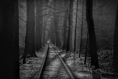 Railroad (Joop Nijhof) Tags: railroad winter forest nature abandoned blackandwhite monochrome train