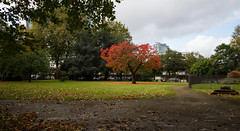 Docklands in Autumn October 2016 (1 of 8) (johnlinford) Tags: autumn canonefs1022 canoneos7d docklands e14 london towerhamlets