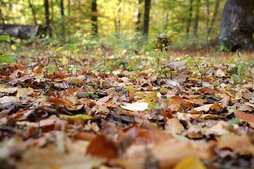 Autumn in Helsingborg 6