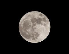 Supermoon Tonight (Curlylocks) Tags: moon night sky supermoon canon 55250 superfullmoon2016 fullmoon newdelhi india