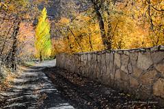 Autumn (Esmaeel Bagherian) Tags: پاییز رنگ رنگهایپاییزی کوچهباغ ایران زشک مشهد خزان درخت اسماعیلباقریان esmaeelbagherian autumn autumnal goldenautumn fall colors tree mashhad zoshk