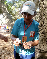 002 Clare Untangling The Results String (saschmitz_earthlink_net) Tags: 2016 california orienteering topangacanyon statepark laoc losangelesorienteeringclub losangeles losangelescounty santamonicamountains