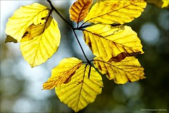 Autumn colours (newmikey) Tags: seasons pentax k5iis digikam heiloo imagemagick ufraw gimp f12lenses nature revuenon55mmf12 gmic autumn forest bos