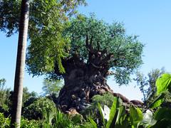TreeOfLife_003 (*Ice Princess*) Tags: nature animalkingdom disney orlando florida disneyworld waltdisneyworld amusementpark tree treeoflife
