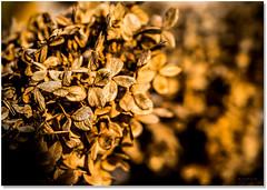 Fall Bounty (Sigpho) Tags: sigpho nikon plants landscape