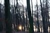Runing light (Pavol Kopinec) Tags: light mace outdoor lucid running