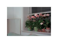 Ghost Town VII. Denmark (June 2005) (csinnbeck) Tags: window sill flowers night canon eos 350d 1855 1855mm 2005 june summer inside denmark dk