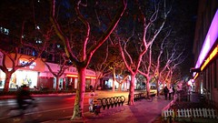 Shanghai - Xinhua Road (cnmark) Tags: china shanghai changning district xinhua road amherst avenue french concession light pink trees fall autumn street scene night nacht nachtaufnahme noche nuit notte noite 中国 上海 长宁区 新华路 ©allrightsreserved