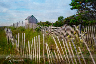 Cape Cod sand fence