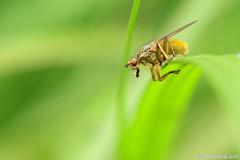 DN9A6560-2 (Josette Veltman) Tags: flowers insects bloemen overijssel vlinders insecten bloem vlieg wesp vlindertuin
