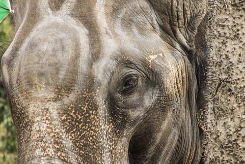 像 / Elephant