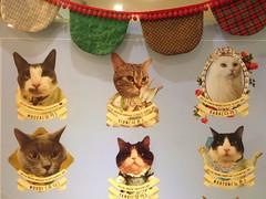 The residents (j-fi) Tags: cats cute strange fur feline asia fat korea odd seoul aww catcafe