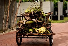 Waste collection day (Ratsiola) Tags: trees coconut gardening carts