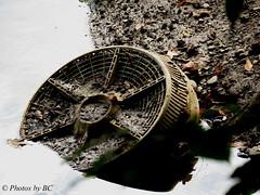 Not A Fan Of Dumpers. (~~BC's~~Photographs~~) Tags: fan washedup cumberlandfallsstatepark kentuckyphotos canonsx50 bcsphotographs